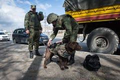 Саперы ратников с собаками обслуживания Стоковые Фото