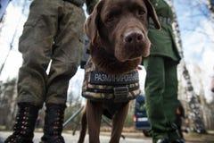 Саперы ратников с собаками обслуживания Стоковое Изображение RF