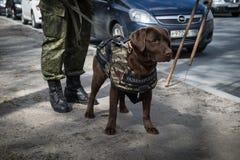 Саперы ратников с собаками обслуживания Стоковое Фото