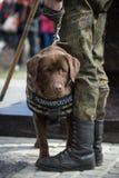 Саперы ратников с собаками обслуживания Стоковая Фотография