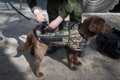 Саперы ратников с собаками обслуживания Стоковые Фотографии RF