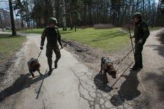 Саперы ратников с собаками обслуживания Стоковая Фотография RF