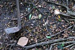 Сапка помещенная в саде стоковые фотографии rf