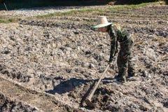 Сапка удерживания женщины садовника делать огород для засаживать сладкого картофеля стоковое фото rf