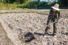 Сапка удерживания женщины садовника делать огород для засаживать сладкого картофеля стоковая фотография