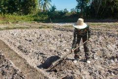 Сапка удерживания женщины садовника делать огород для засаживать сладкого картофеля стоковое фото