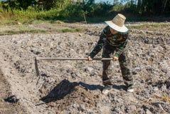Сапка удерживания женщины садовника делать огород для засаживать сладкого картофеля стоковые фотографии rf