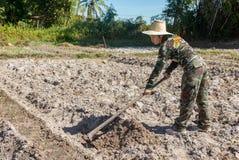Сапка удерживания женщины садовника делать огород для засаживать сладкого картофеля стоковые изображения