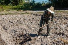 Сапка удерживания женщины садовника делать огород для засаживать сладкого картофеля стоковое изображение rf