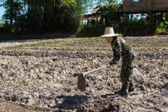 Сапка удерживания женщины садовника делать огород для засаживать сладкого картофеля стоковое изображение
