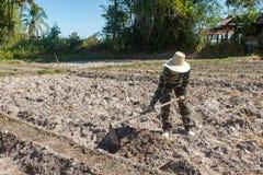 Сапка удерживания женщины садовника делать огород для засаживать сладкого картофеля стоковая фотография rf