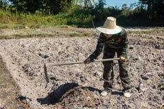 Сапка удерживания женщины садовника делать огород для засаживать сладкого картофеля стоковые фото