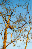 Сарай выходит дерево против неба Стоковое Изображение