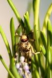 Саранча сидя в траве Стоковые Изображения
