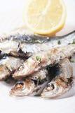 сардина зажженная рыбами Стоковое Фото