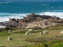 Сардиния ландшафты Стоковые Фотографии RF