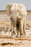 сафари Африки стоковые фото