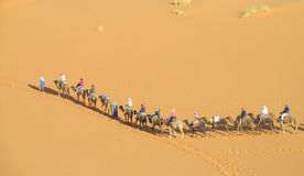 Сафари верблюда в Сахаре Стоковые Фото