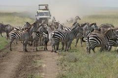 Сафари в Serengeti, Танзании Стоковое Фото