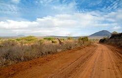 сафари дороги Стоковое Изображение RF