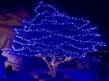 Сафари зоопарка горы Шайенна Стоковые Фото