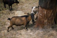 Сафари осла в apulia Италии зоопарка Fasano Стоковые Изображения RF
