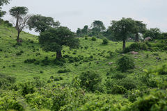 Сафари Танзания Руанда Ботсвана Кения африканского лета саванны одичалое Стоковые Изображения