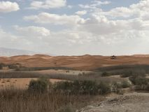 Сафари Al Ain ОАЭ Абу-Даби пустыни стоковые фото