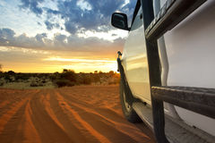 Сафари Kalahari Стоковое фото RF