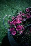 Сафлор помещенный в корзине цветка иллюстрация штока