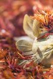 Сафлор, tinctorius Carthamus ложного шафрана стоковая фотография