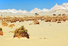 Сахара стоковая фотография