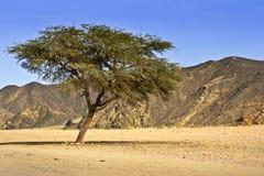 Сахара Стоковые Фото