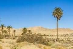 Сахара Стоковые Изображения