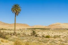 Сахара Стоковые Изображения RF