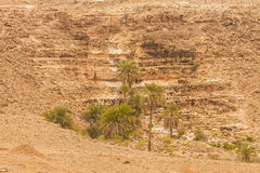 Сахара Стоковое Фото