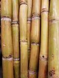Сахарный тростник в лете на полях и магазинах grocey стоковая фотография rf