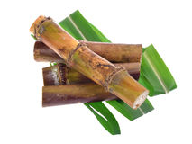 Сахарный тростник изолированный на белой предпосылке Стоковые Изображения