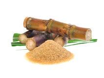 Сахарный тростник изолированный на белой предпосылке Стоковое Изображение RF
