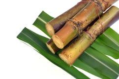 Сахарный тростник изолированный на белой предпосылке Стоковая Фотография