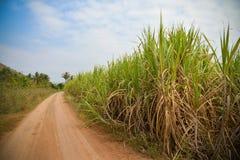 Сахарный тростник фермы грязной улицы Стоковые Фото