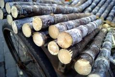 Сахарный тростник Стоковые Фото