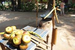 Сахар кокоса сделанный от азиатской ладони пальмиры, ладони Toddy, ладони сахара Стоковая Фотография