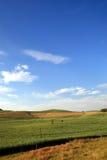 сахар лужка поля тросточки Стоковая Фотография