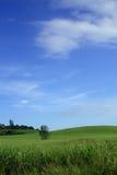 сахар поля тросточки Стоковые Фото
