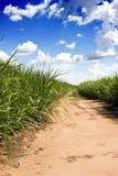 сахар поля тросточки Стоковое Изображение RF