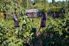 Сад  Ð в деревне galoshes Стоковые Изображения