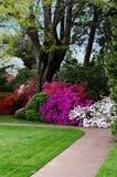 Сад азалии Стоковые Фотографии RF