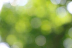Салатовая предпосылка Стоковое Фото