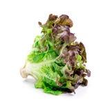 Салат лист дуба Стоковое фото RF